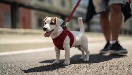 Как научить щенка ходить на поводке: важные советы