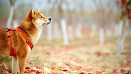Как распознать стресс у собаки: признаки, которые трактуют неправильно