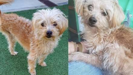 Пес по кличке Виски: актриса Кристен Белл усыновила трехлапую собаку –фото