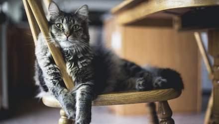 Почему они делают кусь и сидят в коробках: 10 интересных фактов о кошках