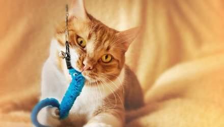 7 товаров для кота, за которые он полюбит вас еще больше