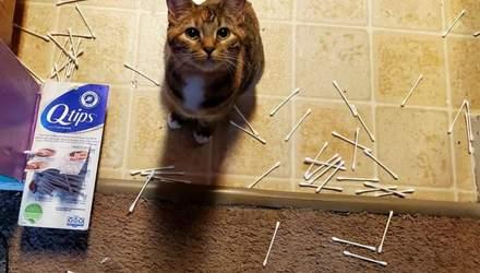 Коты-негодяи: 10 забавных историй из жизни пушистиков