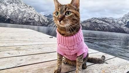 Велопутешественица Нала: кошка, которая проехала 16 тысяч километров