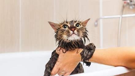 Как правильно купать кота: простой секрет, который убережет от царапин