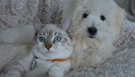 Как подружить кота с собакой в квартире или доме: возможно ли это