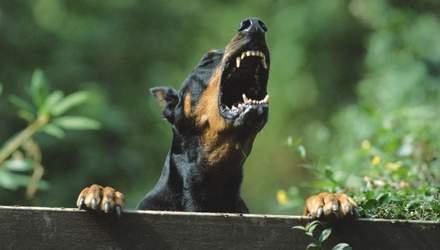 Почему собаки лают: основные причины