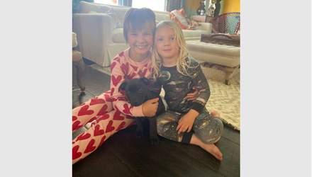 Певица Пинк спасла щенка: как выглядит ее новый любимец – фото