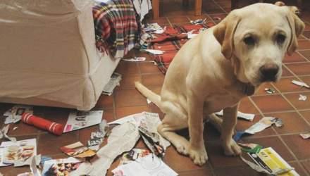 Есть ли у домашних животных плохие привычки: что говорит зоопсихолог