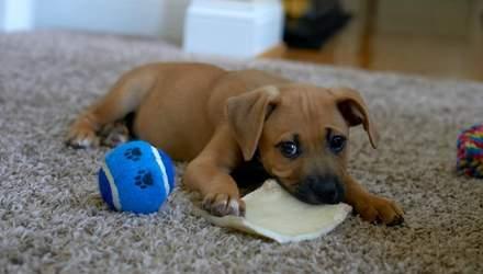 Как отучить щенка грызть все вокруг