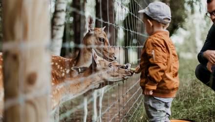 В Черкассах отравили зубра, пострадал не только он: почему не стоит кормить животных в зоопарках