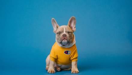 Уход за собаками весной: важные советы хозяевам