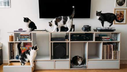 Нашел под кроватью 5 котов и влюбился: как живет известный режиссер и его стая