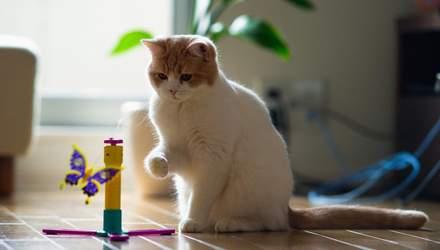 Если у вас есть кот: 6 гениальных советов для хозяев