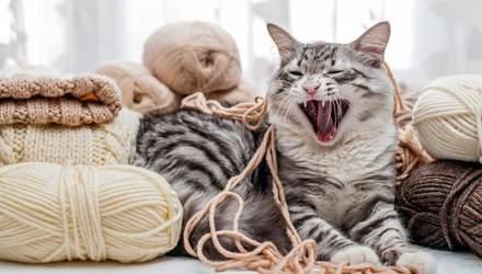 Как сделать кота добрее: лайфхаки для владельцев