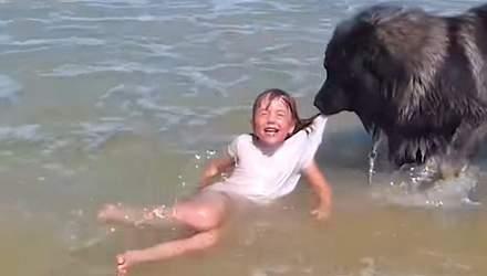 """Собаки спасают людей, которые """"тонут"""": трогательные видео, которые поднимают настроение"""