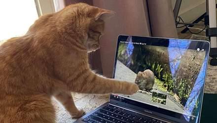 Соседский кот ходит в гости к женщине, чтобы смотреть видео на ютубе: милые фото