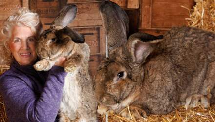 В Англии похитили крупнейшего в мире кролика: владелица предлагает большую награду