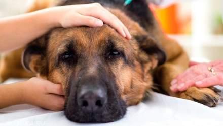 Что делать при отравлении собаки: симптомы и первая помощь