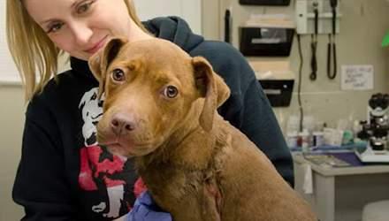 Породистого щенка покинули возле дороги на морозе: невероятная история спасения