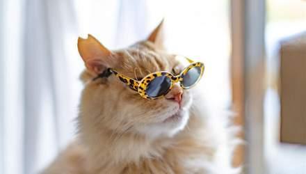 Стильные коты в очках: забавные фото домашних любимцев
