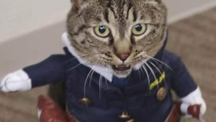 Кошечка стала начальницей полиции в Японии, потому что помогла спасти человека
