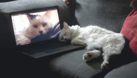 Создали специальный мяубук для кошек: с подогревом и мышкой для игр