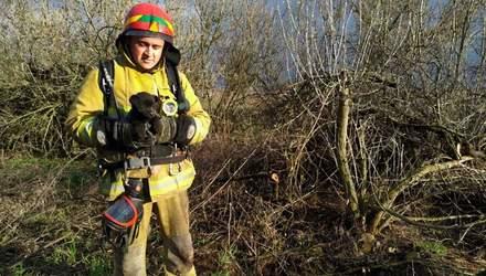 Вытащили со дна 15-метрового колодца: на Днепропетровщине ГСЧС спасли щенка – фото