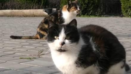 На Херсонщине мужчина устроил на работу котов: какие обязанности и зарплата у животных