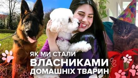 Как мы стали владельцами домашних животных: особенные истории