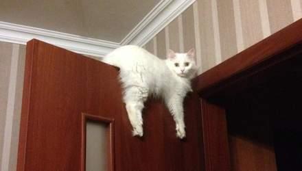 10 признаков, что ваш кот считает себя хозяином в доме: курьезные фото