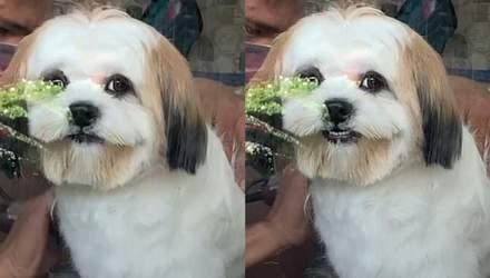 Голливудская улыбка: щенок улыбнулся своей хозяйке и стал звездой сети