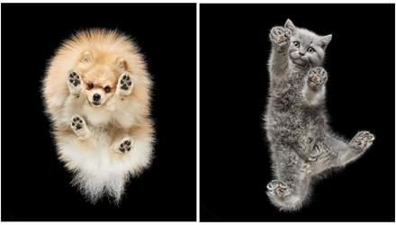 Словно дрейфуют в пространстве: литовский фотограф снимает домашних любимцев снизу