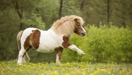 В Одесском зоопарке пополнение: родился жеребенок пони – фото