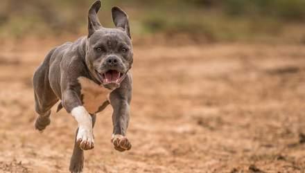 Сезон клещей: как защитить собаку от опасных паразитов