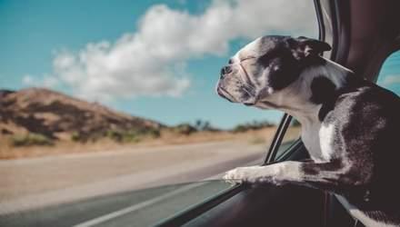 Перевозка собак в авто: как делать это безопасно