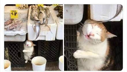 Эти коты чувствуют себя хозяевами в маленьких магазинах: забавные фото