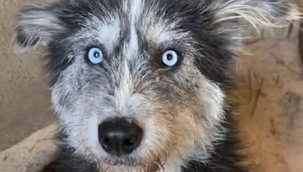 Бездомная собака просила людей помочь своим щенкам: чем закончилась трогательная история