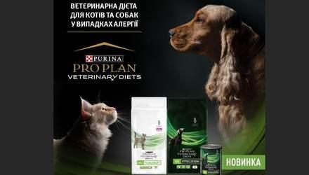 Чем кормить собак и кошек, склонных к пищевой аллергии