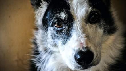 Неделя идентификации животных: что делать, если вы нашли на улице собаку или кошку