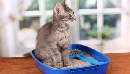 Сколько наполнителя нужно насыпать в кошачий лоток