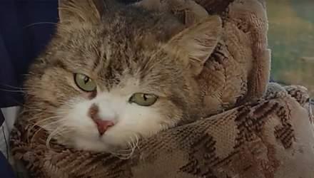 Спасли кота с 18-метрового колодца на Харьковщине: милое видео