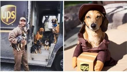 Доставка счастья: как в США жизни курьеров улучшают собаки