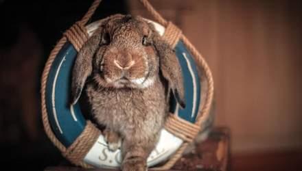 Как живет дрессированный кролик, который вырос в собачьем приюте: волшебные фото