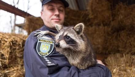 Спасены от насилия: во Львове провели фотосет с животными с непростой судьбой