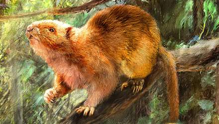 Гигантские крысы бродили по Земле тысячи лет назад: ученые раскопали их останки