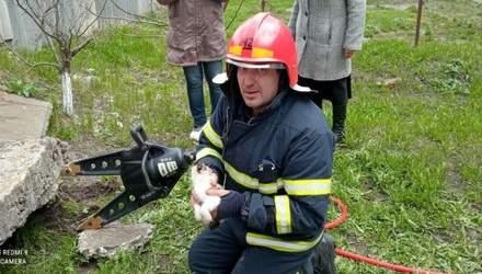 Не прошли мимо: в Харьковской области целая бригада спасателей освобождала котенка