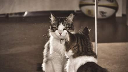 7 причин завести кота: доказано учеными