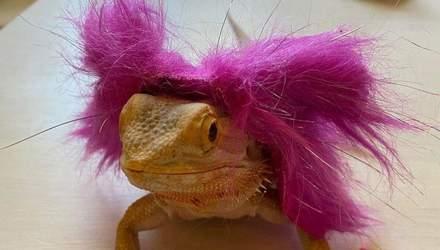 Ким Кардашьян и ее стильная ящерица: как выглядит звездный любимец – фото