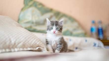 Первые шаги кота в новом доме: как подготовиться хозяину