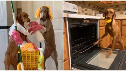 В США собаки стали домашними помощницами